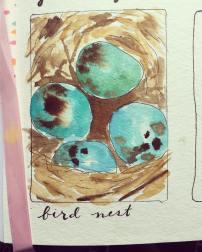 Bird Nest, April 2017